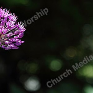 Purple Star Flower Christian Worship Background. High quality worship images for use to spread the Gospel and enhance the worship experience.