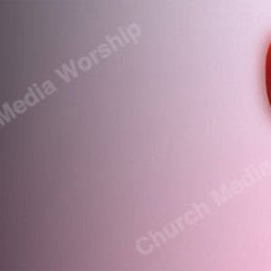 Tulip Pink Background Christian Worship Background. High quality worship images for use to spread the Gospel and enhance the worship experience.
