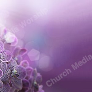Violet Orchids Christian Worship Background. High quality worship images for use to spread the Gospel and enhance the worship experience.