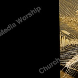 Wheat V1 black Christian Worship Background. High quality worship images for use to spread the Gospel and enhance the worship experience.