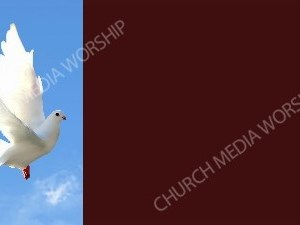 Dove in flight Burgendy 2-3rds Christian Background Images HD