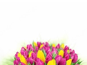 Easter yellow and pink springtime Tulips white matte Christian Worship Background. High quality worship images for use to spread the Gospel and enhance the worship experience.