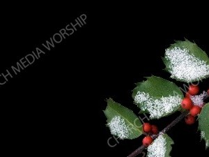 Holly with Snow - Black Christian Worship Background. High quality worship images for use to spread the Gospel and enhance the worship experience.