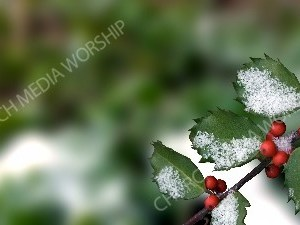 Holly with Snow - winter garden Christian Worship Background. High quality worship images for use to spread the Gospel and enhance the worship experience.