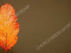Orange fall leaf Christian Worship Background. High quality worship images for use to spread the Gospel and enhance the worship experience.