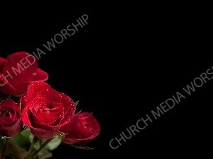 Red Roses Black matte Christian Worship Background. High quality worship images for use to spread the Gospel and enhance the worship experience.