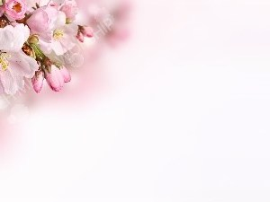 Spring Branch with pink and white blossoms Christian Worship Background. High quality worship images for use to spread the Gospel and enhance the worship experience.