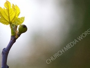 Spring in new life Christian Worship Background. High quality worship images for use to spread the Gospel and enhance the worship experience.