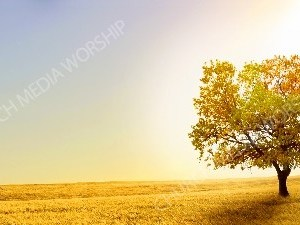 Sun reflecting behind Autumn Tree and field Christian Worship Background. High quality worship images for use to spread the Gospel and enhance the worship experience.
