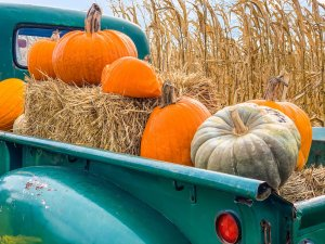 Pumpkins and hay in the back of a pickup truck