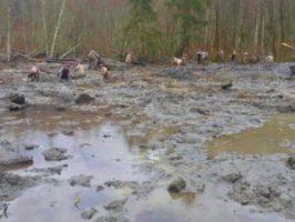 wa_national_guard_mudslide.jpg
