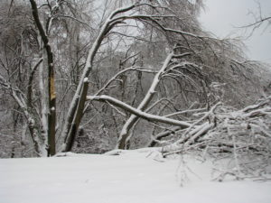 """""""Winter Trees"""" captured in 2009 at Louisville, KYPhoto by merfam, used under CCA-SA"""