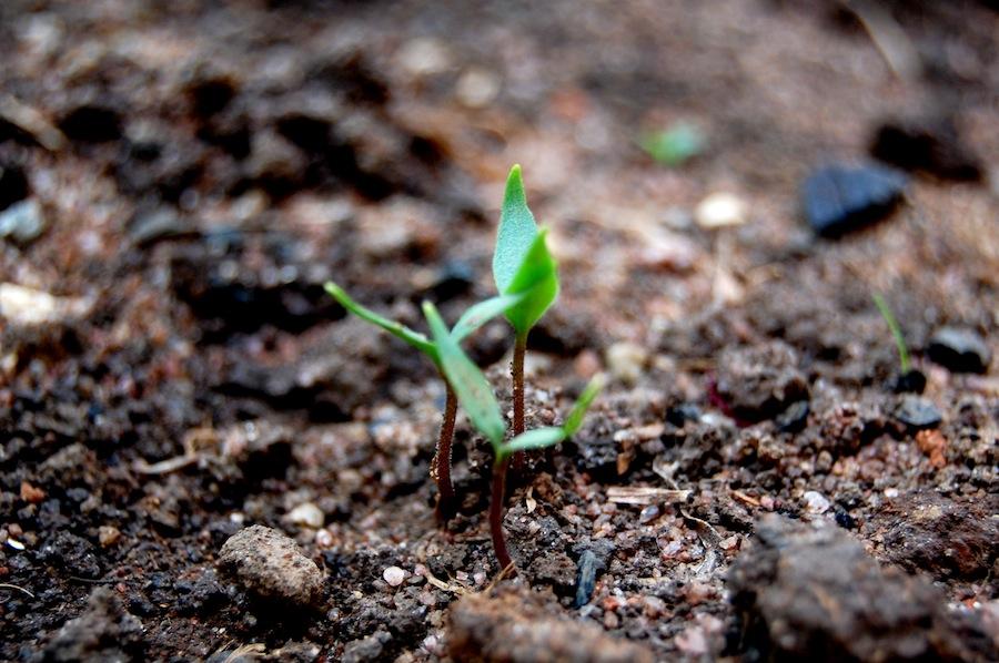 Seventeen Characteristics of a Qualified Church Planter