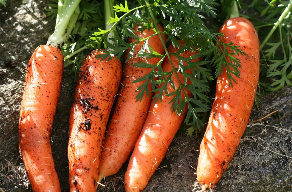 Don't Pull Up The Carrots