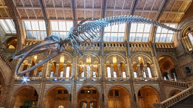 Natural History Museum - Museum - visitlondon.com