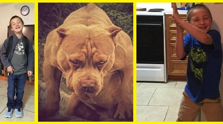 Perros asesinos de la raza Pitbull destrozan y matan a niño de 5 añitos.