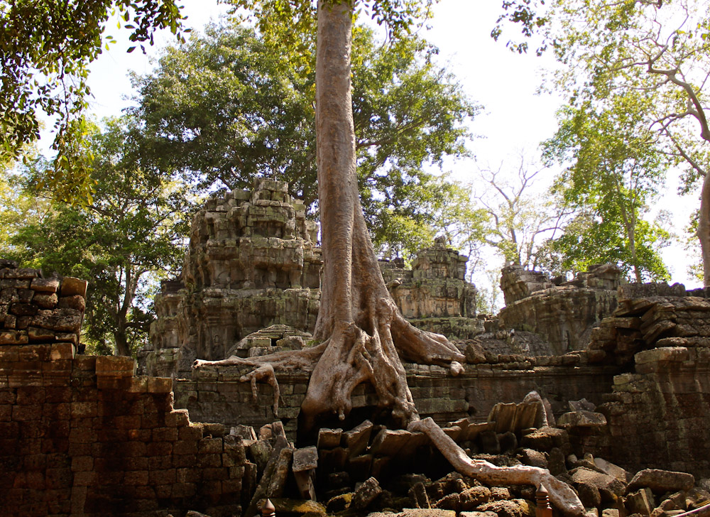 Ta Prohm Siem Reap Cambodia-20