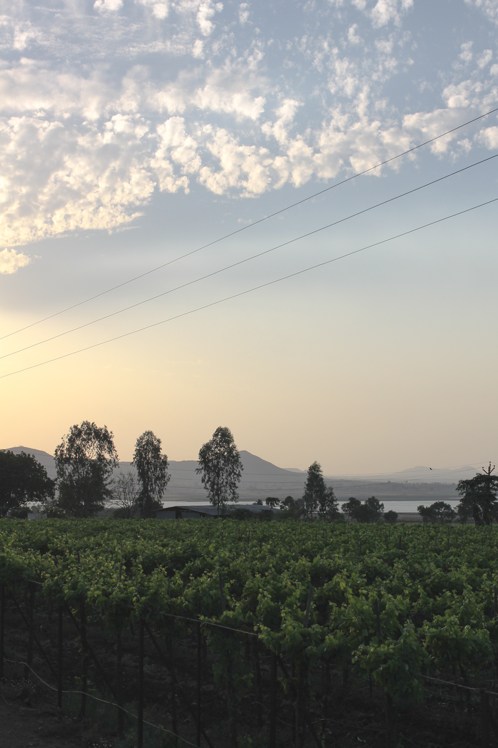 York Winery Nashik-31