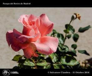 D8B_0117_bis_Madrid_Parque_del_Retiro