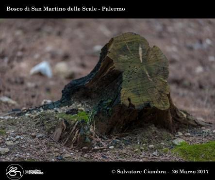 _D7D6391_bis_Bosco_di_San_Martino_delle_Scale