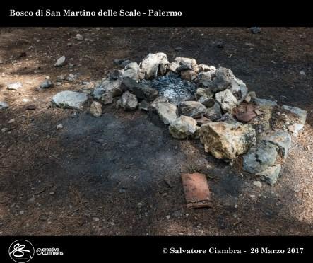 D8B_3481_bis_Bosco_di_San_Martino_delle_Scale