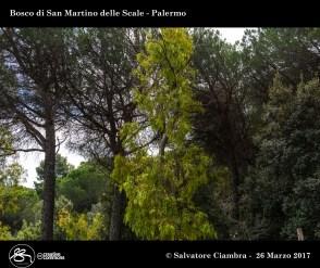 D8B_3484_bis_Bosco_di_San_Martino_delle_Scale