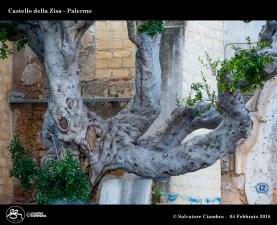 _D7D8634_bis_Castello_della_Zisa