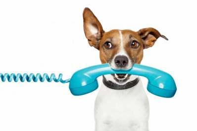Call CiaoCiao PetCare, your Local Dog Walkers in Irvine and Newport Beach, at 949-237-8789.