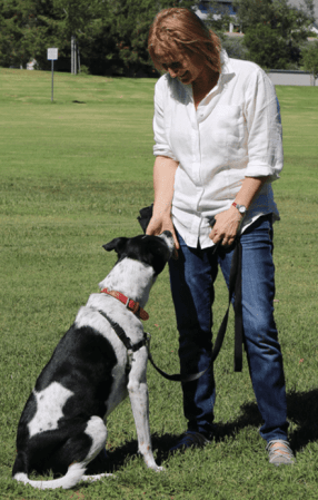 Dog Walks for Dogs Difficult On Leash by CiaoCiao PetCare - Charly with her walker, Livia