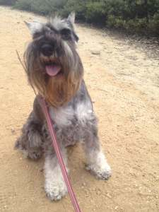 Walks For Dogs Who Are Difficult On Leash