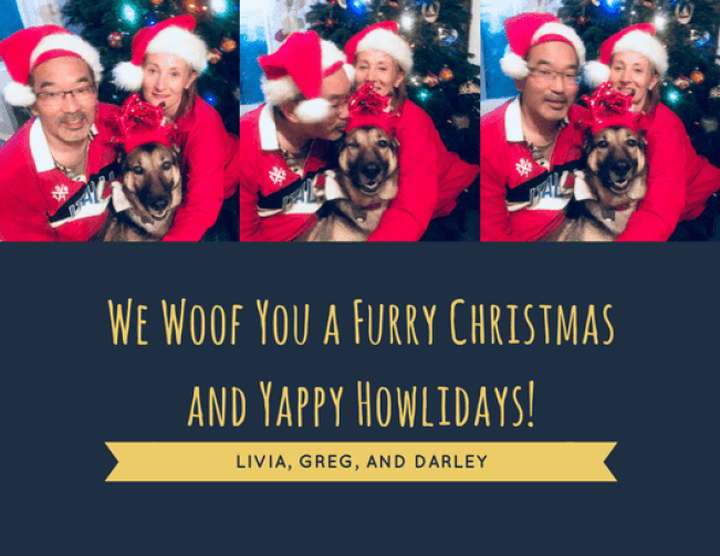 Yappy Howlidays from CiaoCiao PetCare - Dog Walking