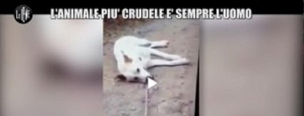 Giustizia fatta per Angelo: I 4 ragazzi che a Sangineto uccisero il cane saranno processati
