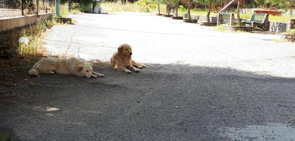 San Nicola, lettore segnala cani abbandonati
