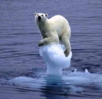 Resultado de imagen para Fotos del casquete polar ártico