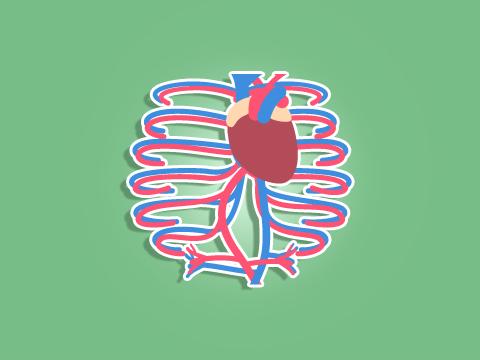 e-learning-plongee-niveau-4-vaisseaux-sanguins