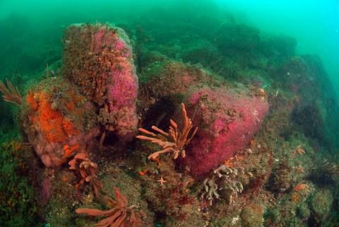 15 ans de surveillance de la faune et de la flore du littoral breton