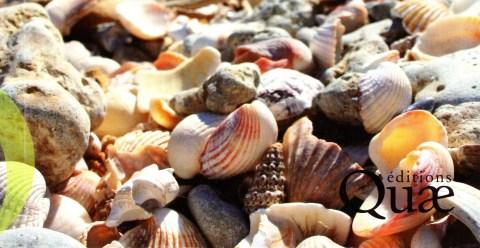 Les coquillages de nos rivages