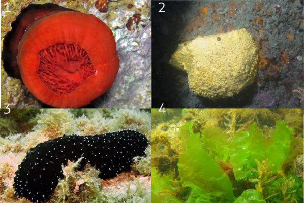Vivre sous les mers