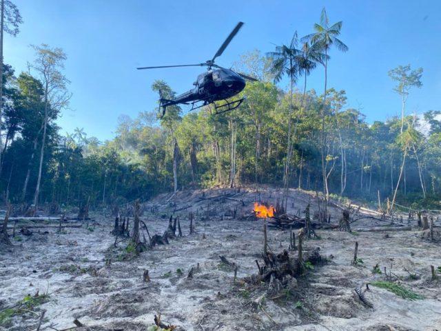 Operação apreende 700 kg de maconha no Maranhão pronta para consumo