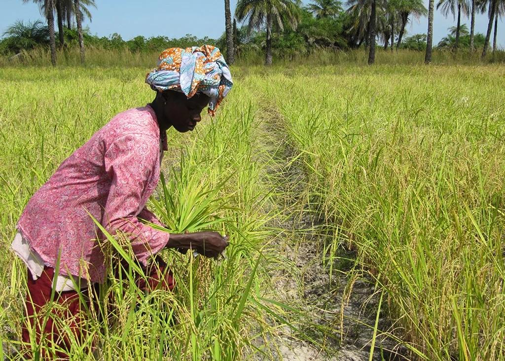 desarrollo productivo y rural