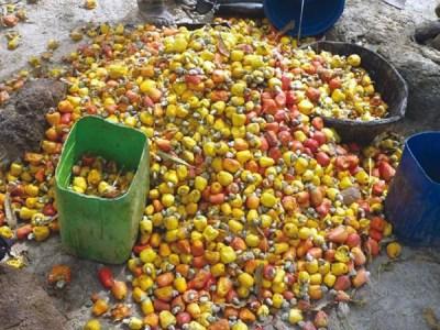 Autonomía económica y social de mujeres de la región de Sikasso (Malí), a partir de la transformación y comercialización del anacardo
