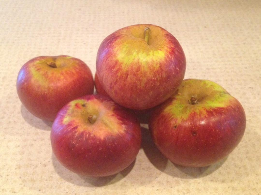 Apple Variety: Dabinett