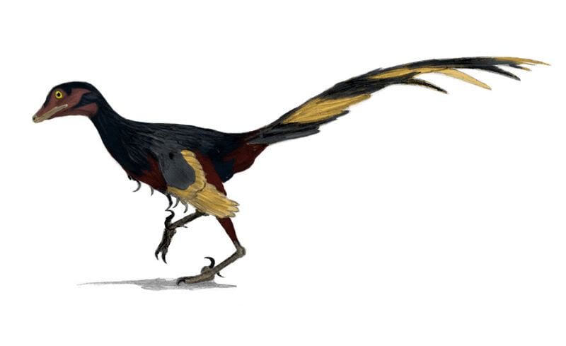 sopita de dinosaurio