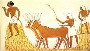 Egipicos cultivando trigo