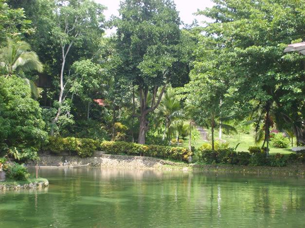 Regiones naturales del mundo parte 2 zona templada del for Poda de arboles zona sur