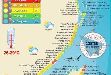Detectan acumulación excesiva de sargazo en Punta Esmeralda y Xcalacoco