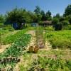 organik tarım çevre için neden önemli çiftçiden eve