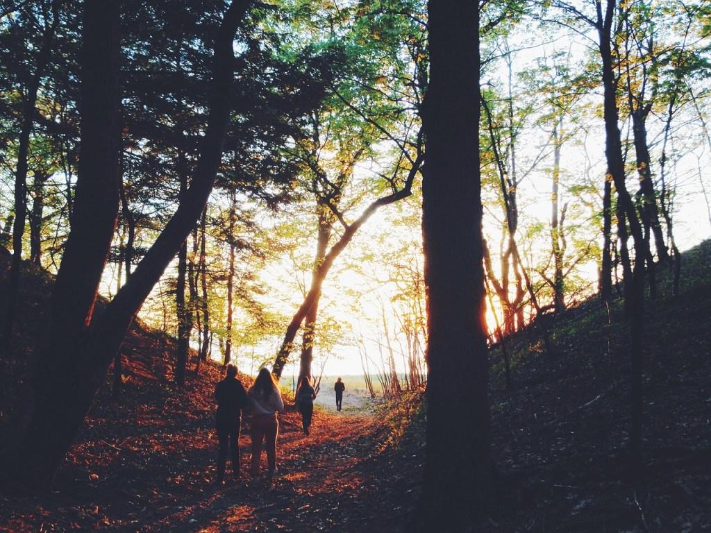 trees, woods, people