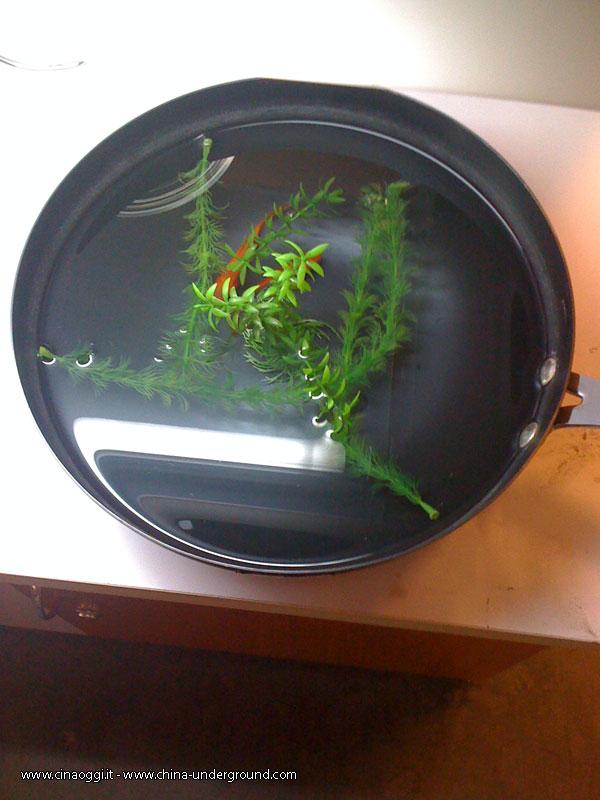 golden-fish-pot-2
