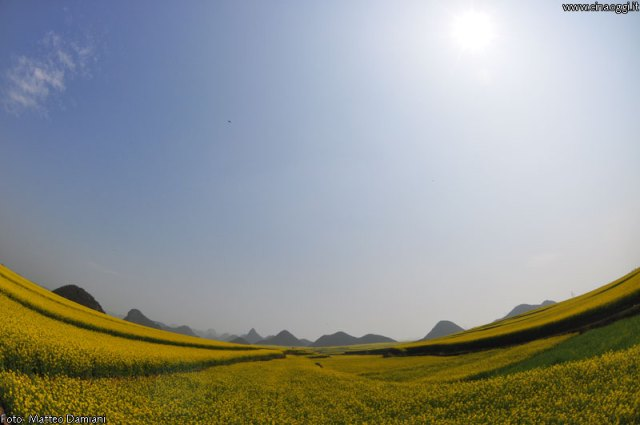 luoping_flowers_yunnan_001